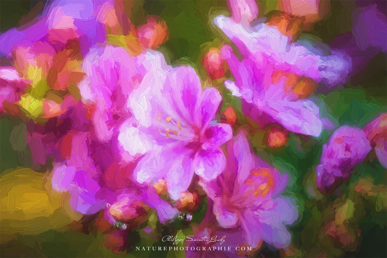 Macro de fleurs en paintographie