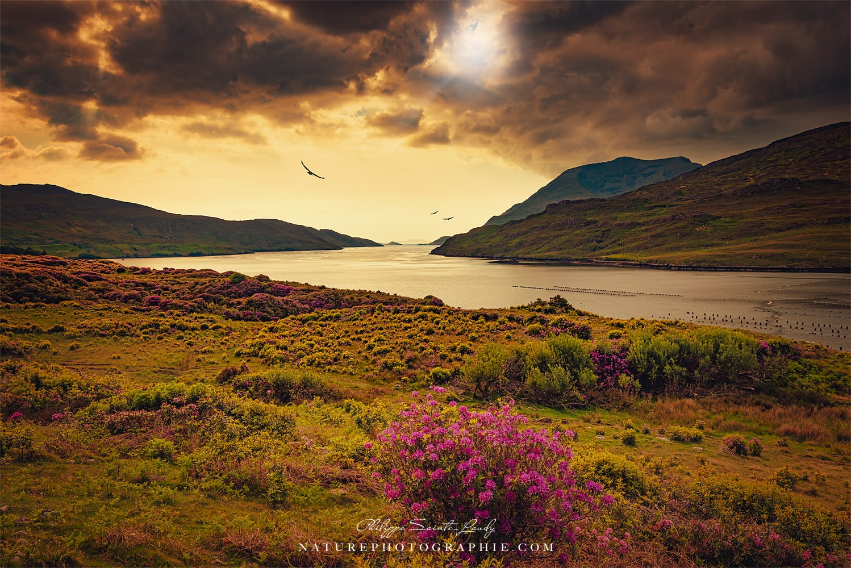 Paysage sauvage d'Irlande un soir de printemps