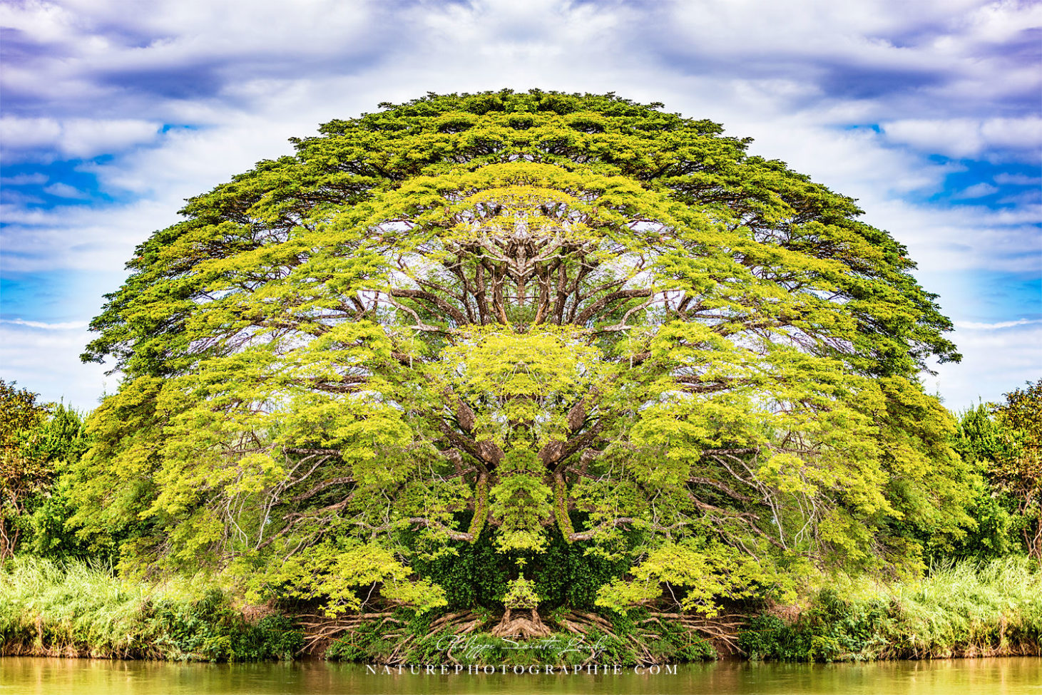 The Majestic Tree