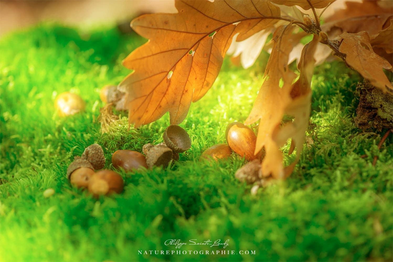 Premières traces d'automne