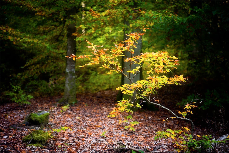 Arbuste en Sous-Bois
