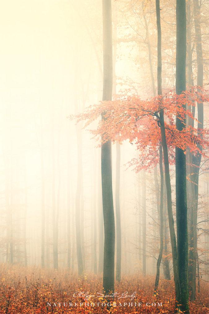 Couleurs d'automne en forêt