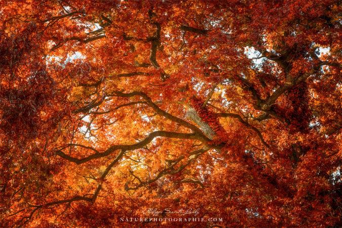 Automne et couleur de chêne