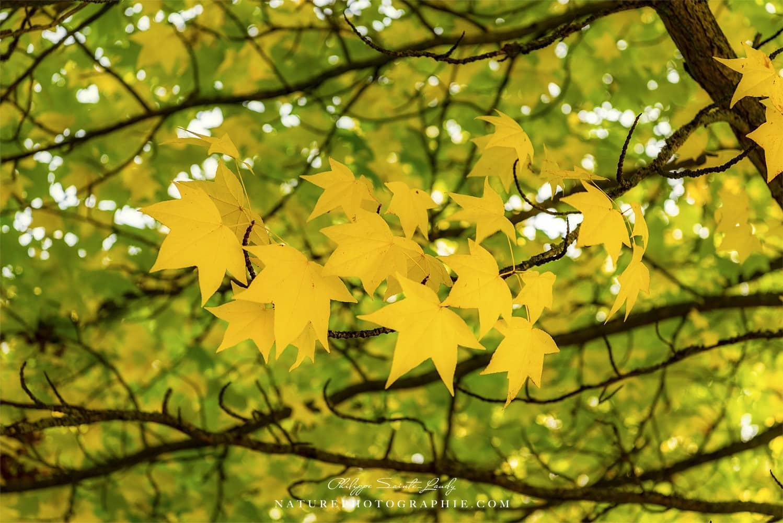 Dans le vent de l'automne