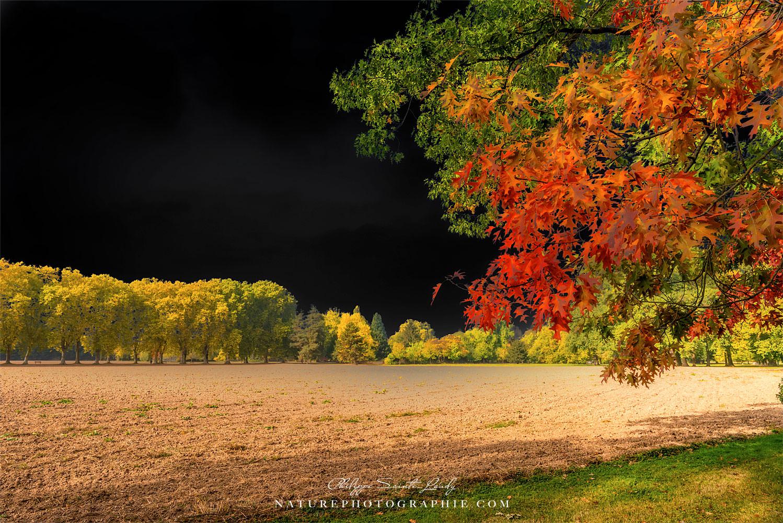 Ciel noir et couleurs d'automne