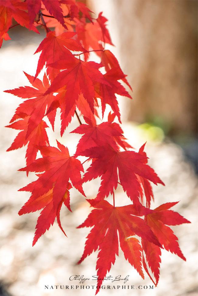 Guirlande d'automne