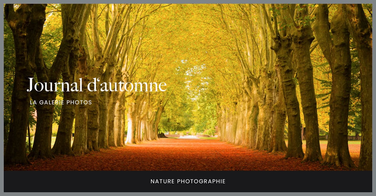 Journal d'automne, la galerie photos