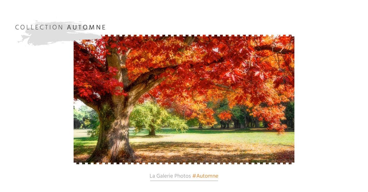 La collection photos d'automne