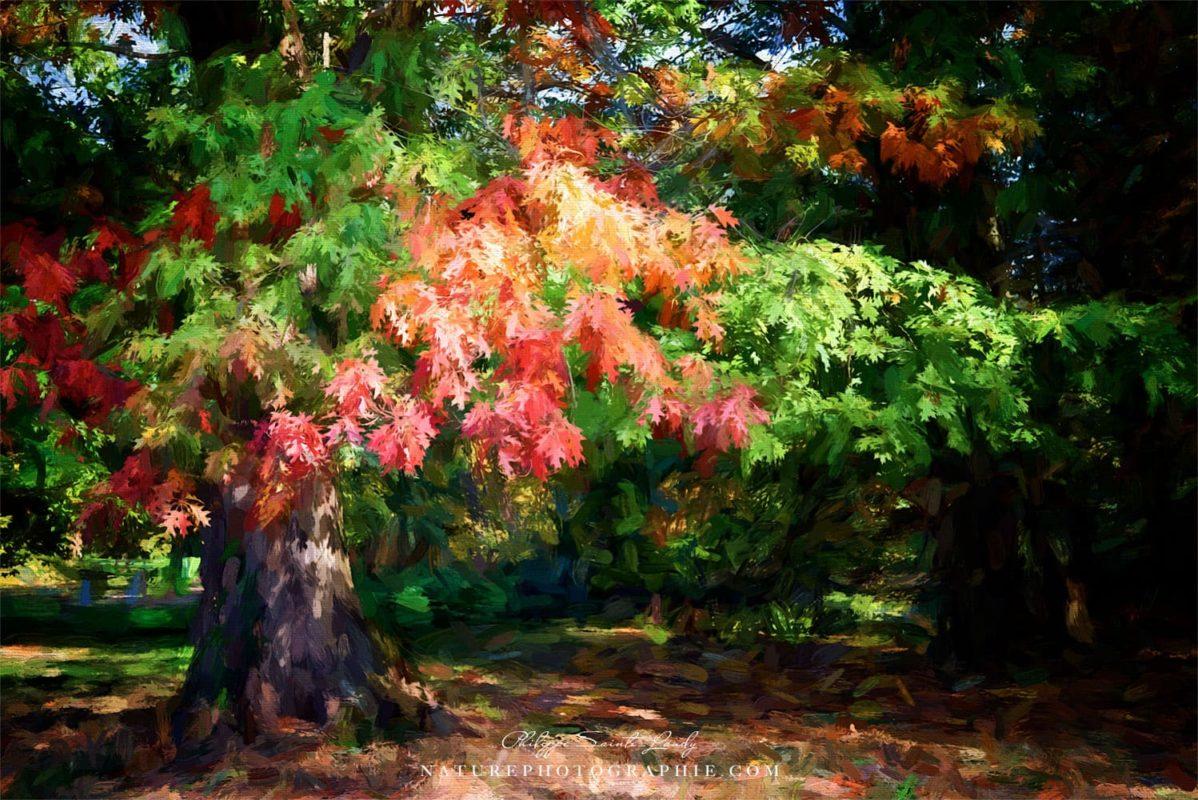 L'automne est à notre porte