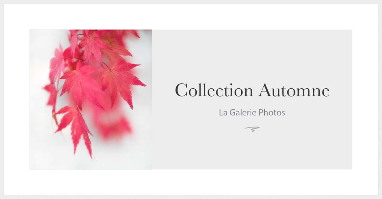 Les photos de la collection automne
