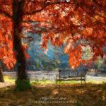 Secret d'automne