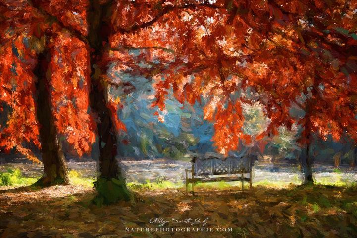 Chêne en automne