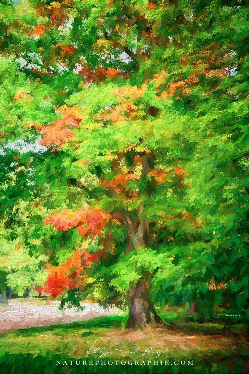 Touche d'automne