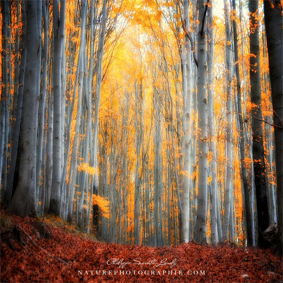 Un Automne en Forêt
