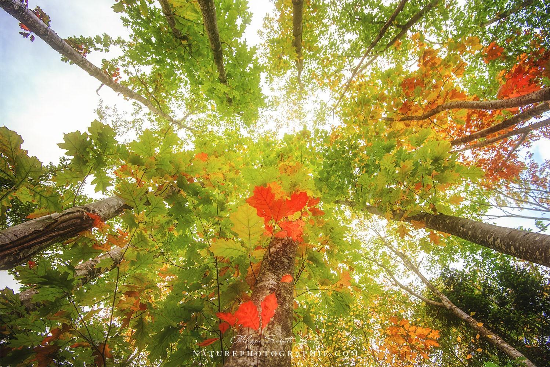 Photo en contre-plongée d'une forêt en automne