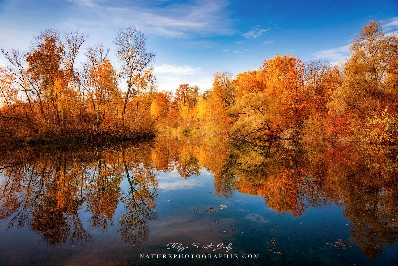 Une photo d'automne avec une forêt au bord d'un lac
