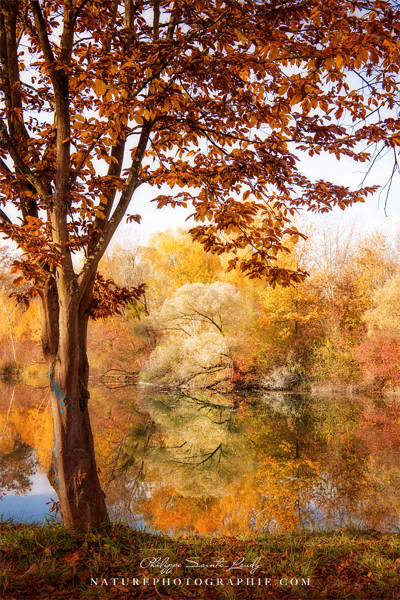 Autumnal Frame