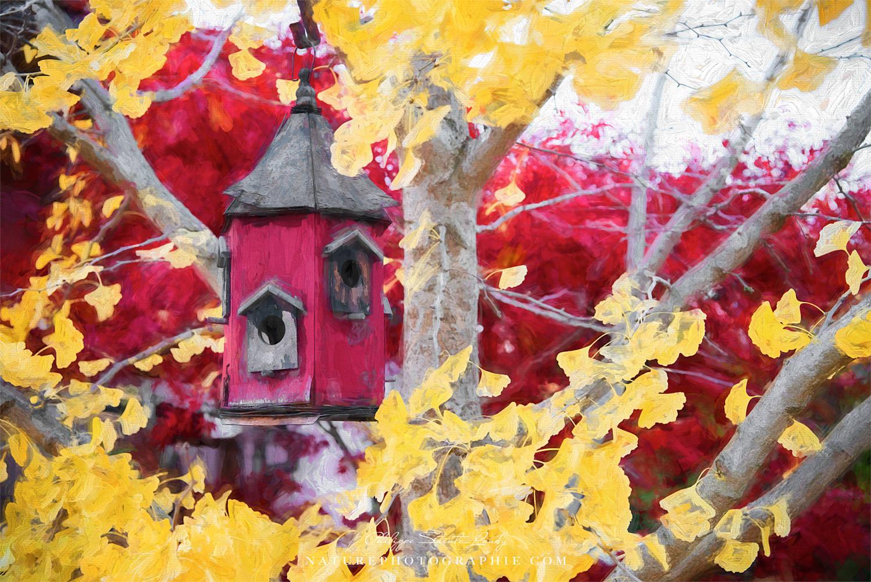 Birdhouse in a Ginkgo
