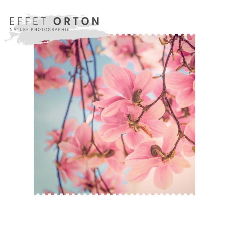 Effet Orton