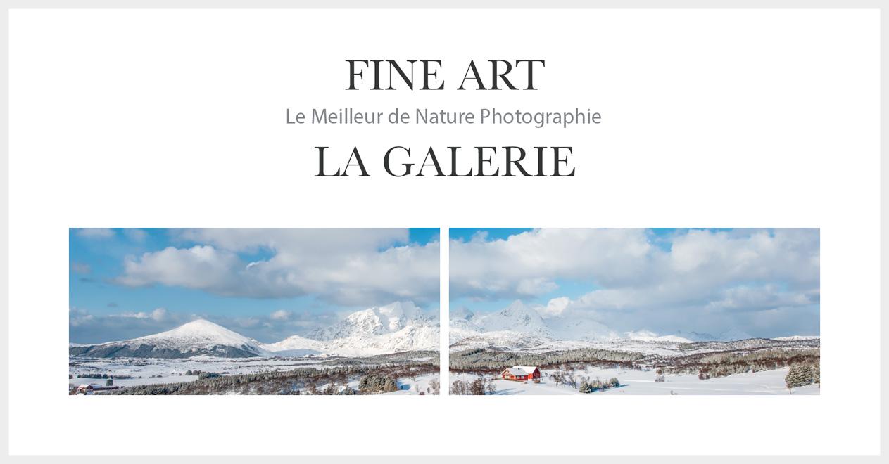 Fine Art - La Galerie Photos