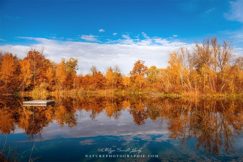 Reflet d'une forêt dans un lac en automne