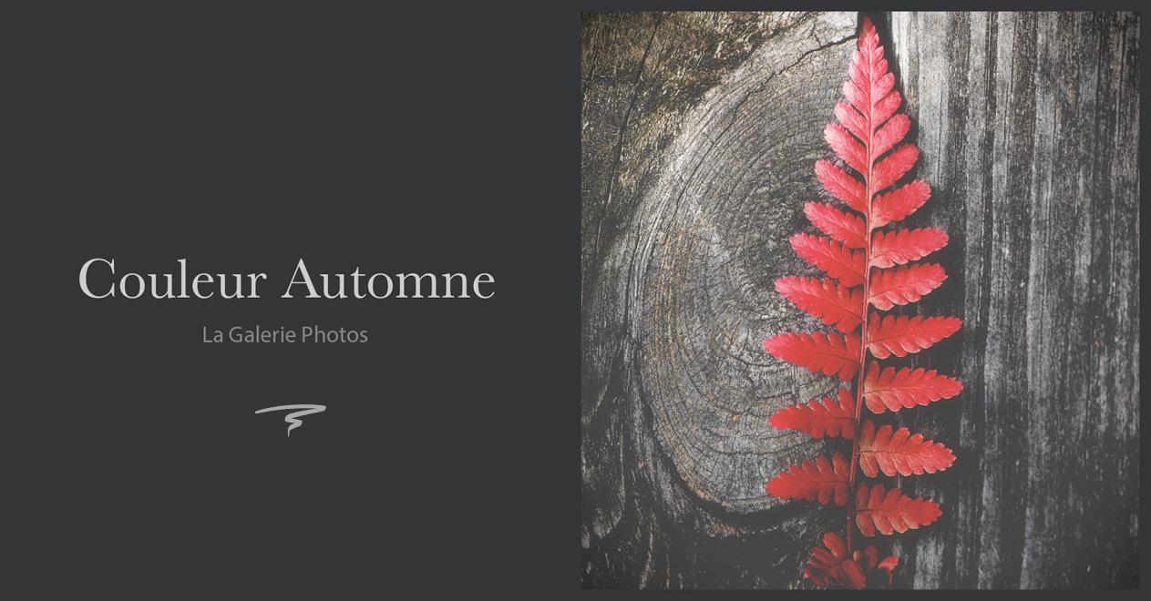 Les photos d'automne - La galerie