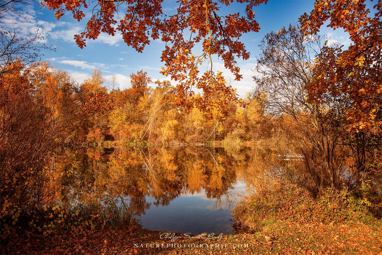 Tout l'automne dans une photo