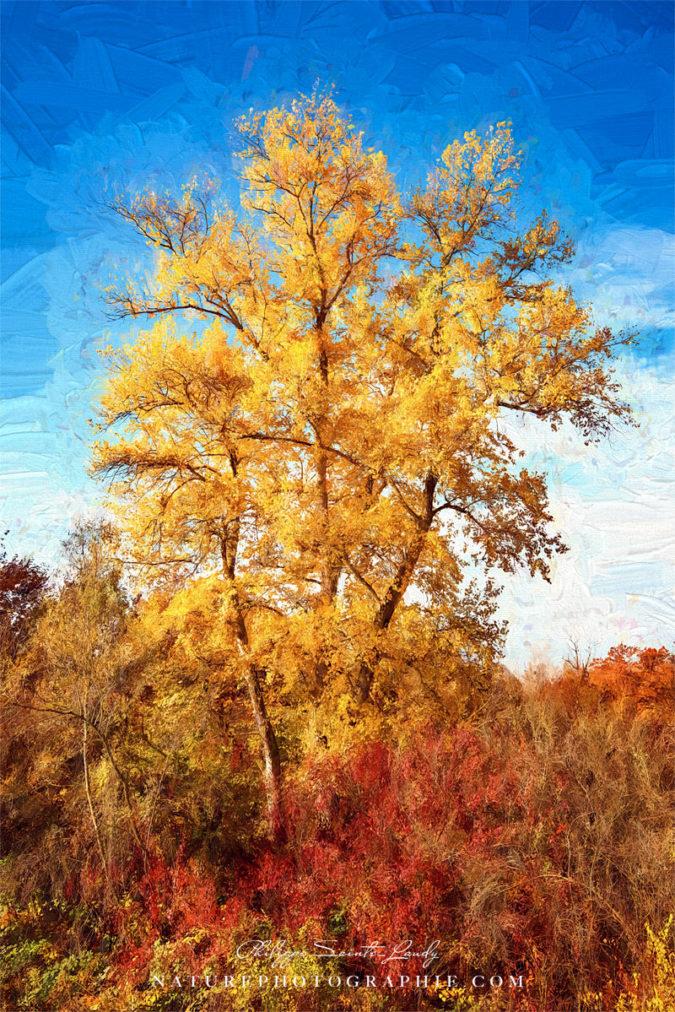 Paintographie automnale d'un arbre