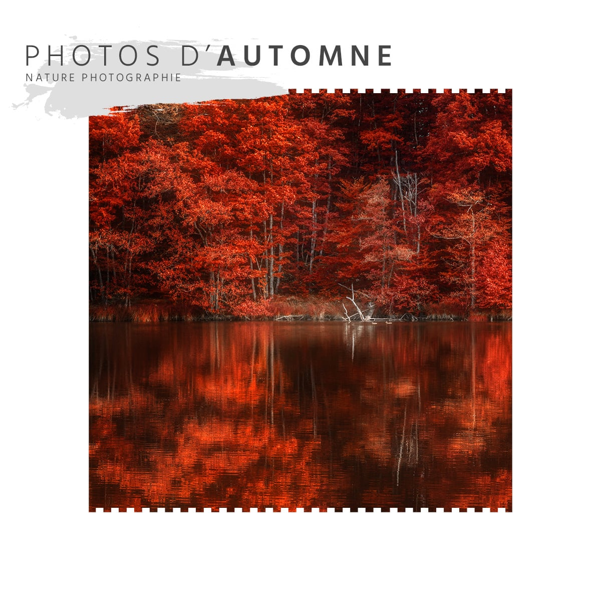 Photos d'automne