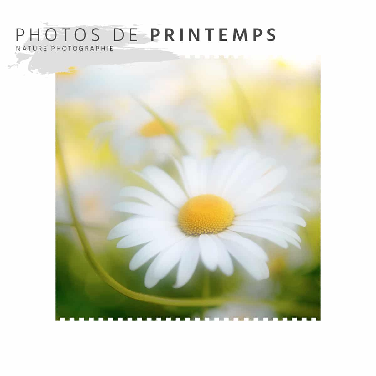 Photos de Printemps