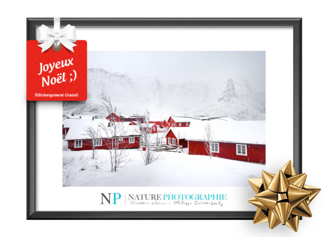 Cadeau de Noël Nature Photographie
