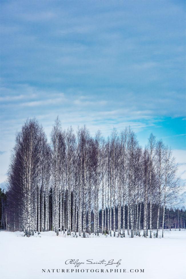 Trees of Eternity