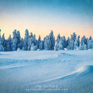 Peaceful Wintermood