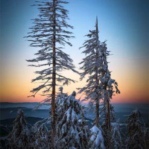 Winter fragment
