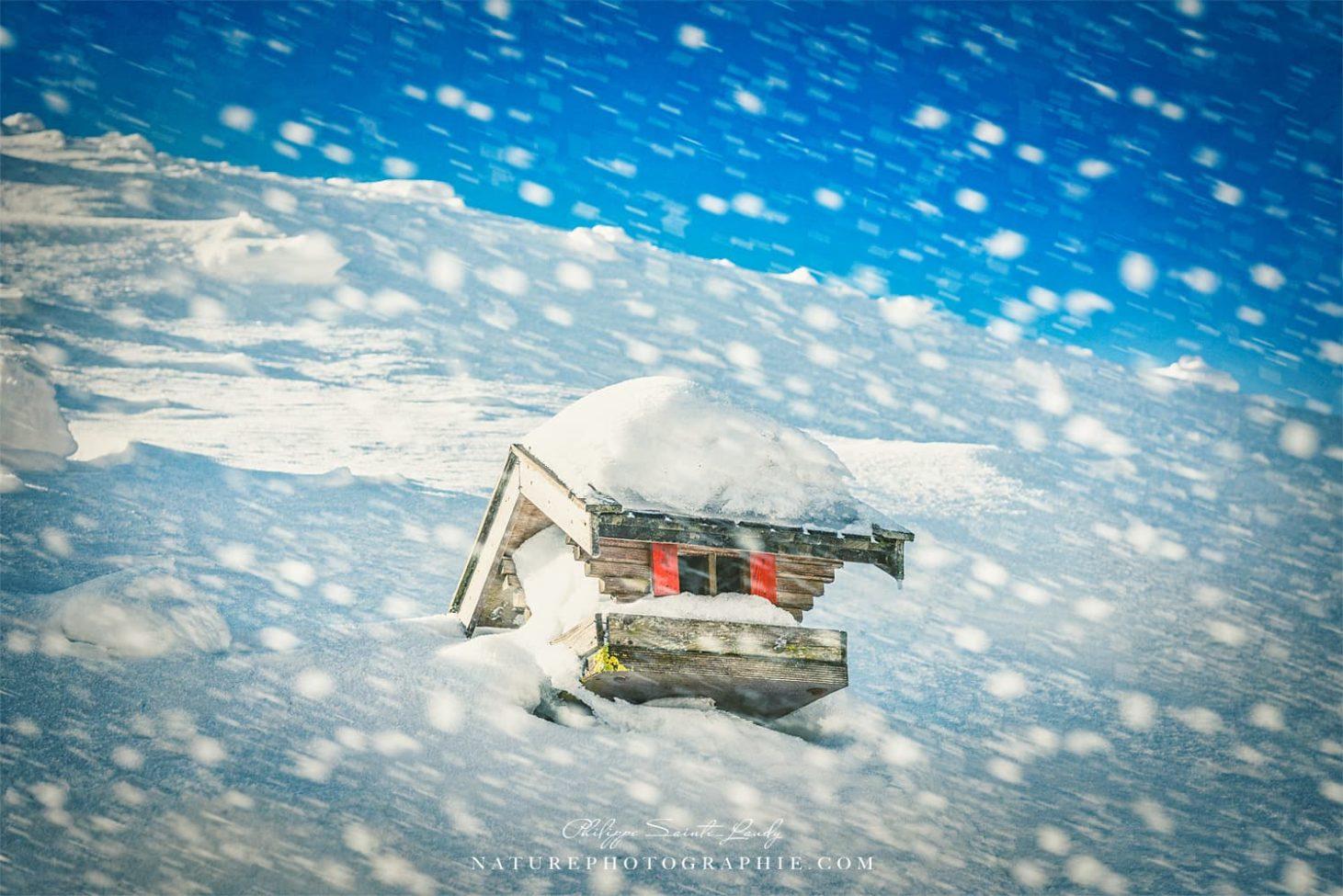 Winter Move