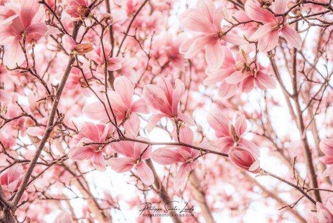 Magnolias Jamming