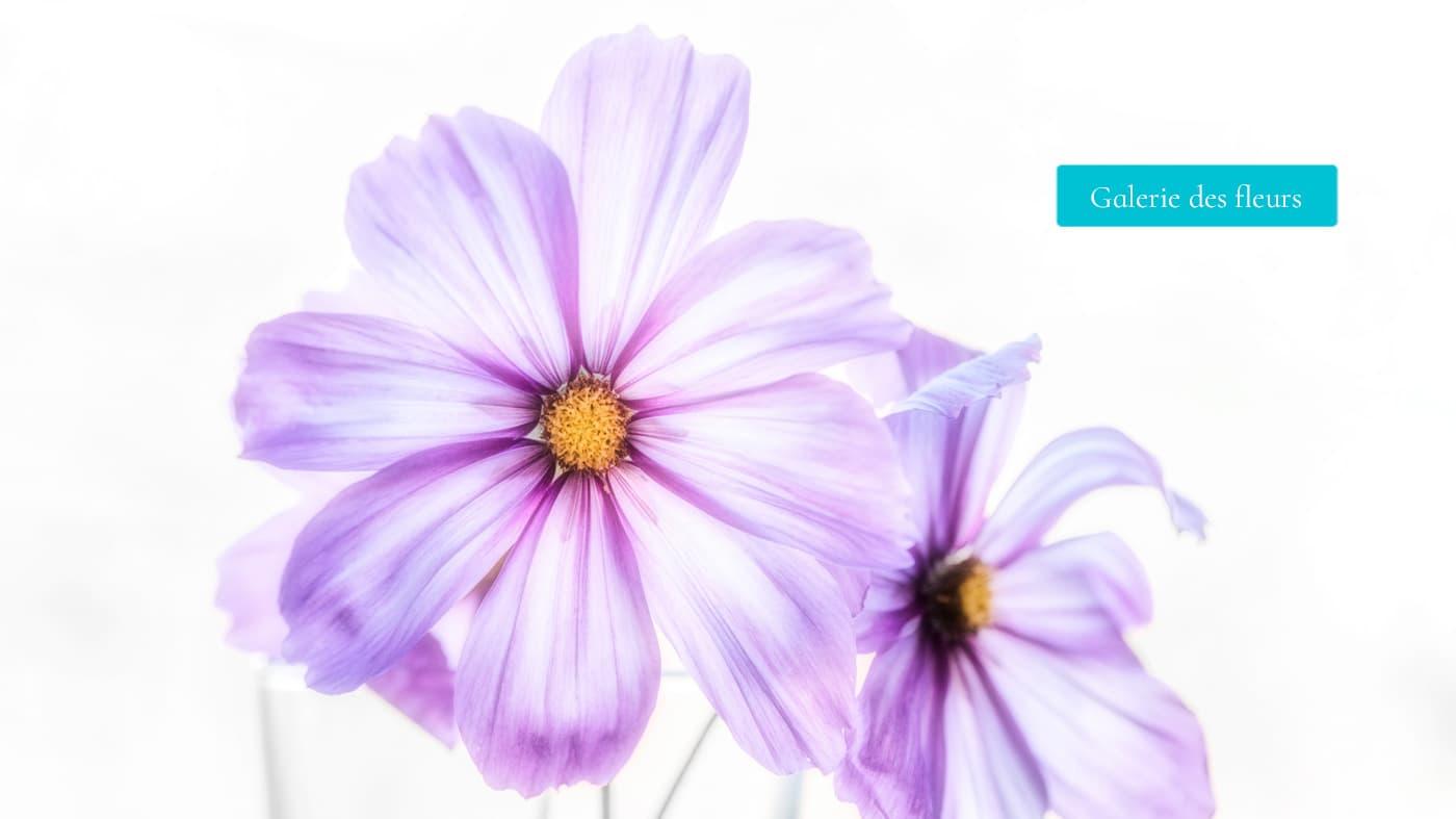 La galerie photos des fleurs