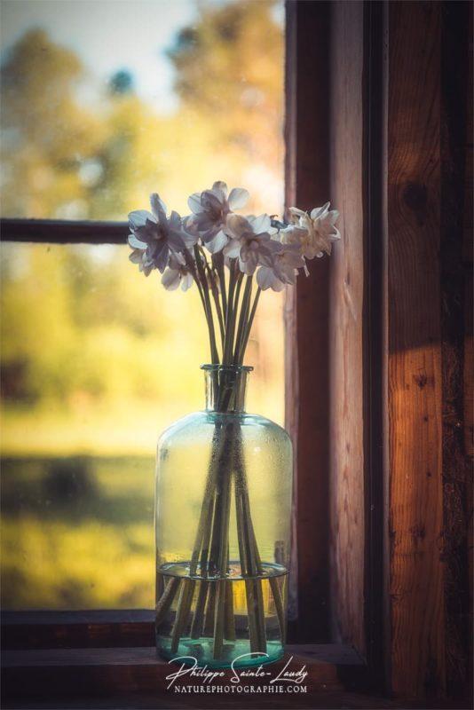 Un bouquet de narcisses dans un vase près d'une fenêtre.