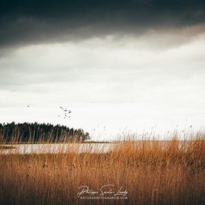 Les bords de la mer baltique en Estonie