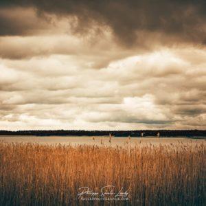 Heure dorée sur les bords de la baltique dans le golfe de Finlande