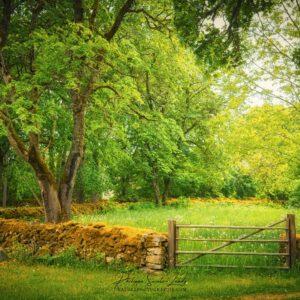 Un pré vert en Estonie