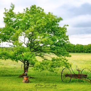 Pose longue en plein jour sur un arbre dans le vent