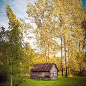 Écrin de verdure en Estonie