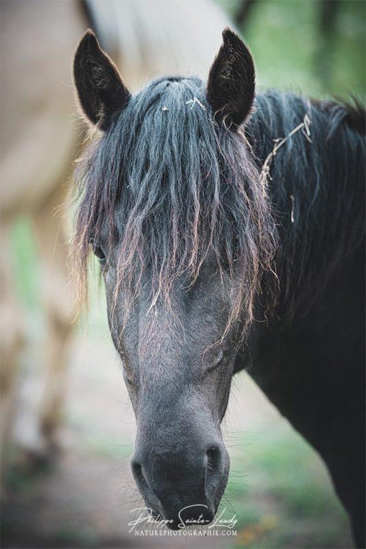 Portrait de cheval noir