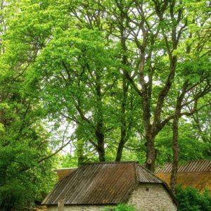 Une ferme dans la nature Estonienne