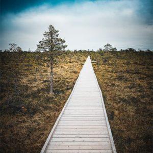 Paysage avec chemin sur pilotis dans le parc de Laheema en Estonie