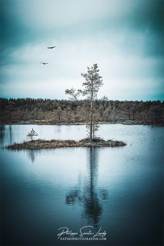 Reflet d'un arbre dans les marécages de Laheema en Estonie