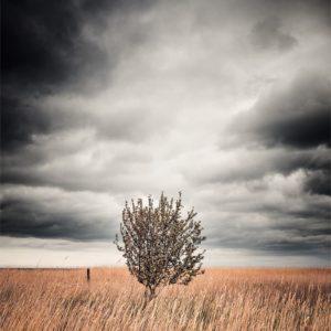 Un arbre dans les hautes herbes au bord de la mer Baltique