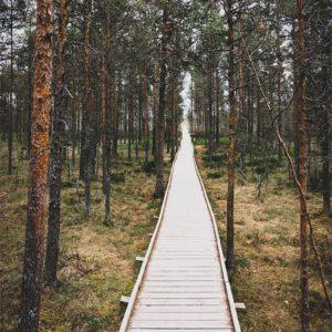 Chemin sur pilotis à travers la forêt de Laheema
