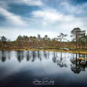 Marécages dans le parc de Laheema en Estonie